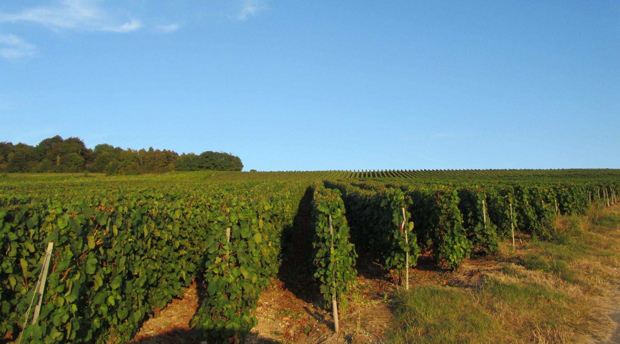 florian boehm wines